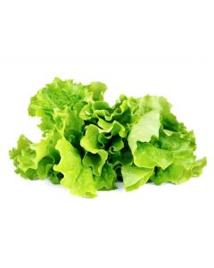 FRESH LETTUCE 1 PACKET (300g)